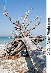 nyár, tengerpart szünidő