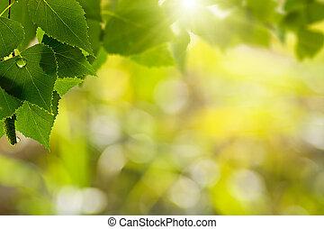 nyár, természetes, harmat, elvont, háttér, reggel, erdő