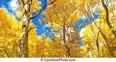 nyárfa, őt lap, ragyogó, fa, sárga, ősz, th, bukás, mennyezet