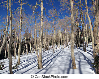 nyárfa, alatt, tél