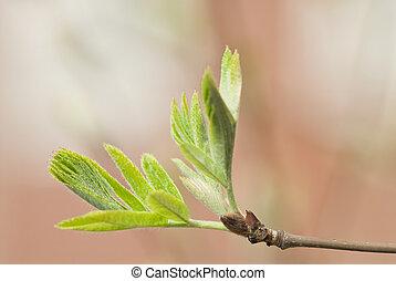 nyílik, zöld fa, kézbesít