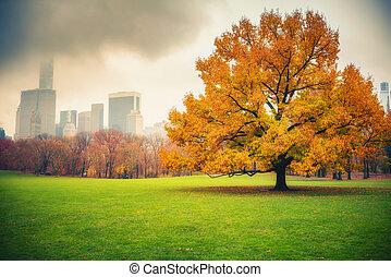 NY Central park at rainy day
