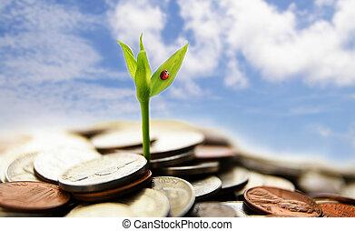 ny tilvækst, af, mønter, -, finansielt begreb