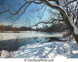 NYC - Central Park winter lake