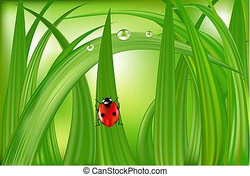 nyckelpiga, på, grönt gräs