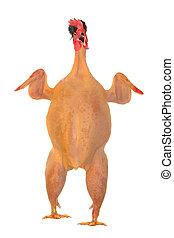 nyers, hosszúság, tele, csirke, fekvő