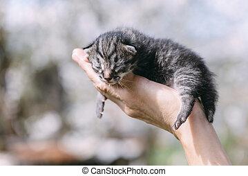 nyfödd, outdors, kattunge, räcker