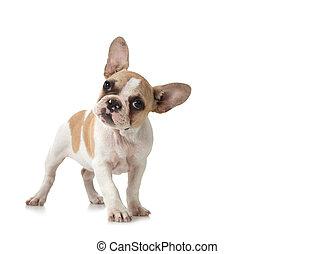 nyfiken, valp, hund, med, avskrift tomrum