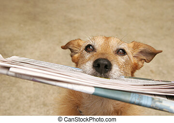nyhed, hund, daglige