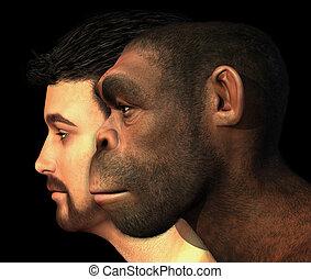 nymodig, mänsklig, och, homo, erectus, man, jämfört