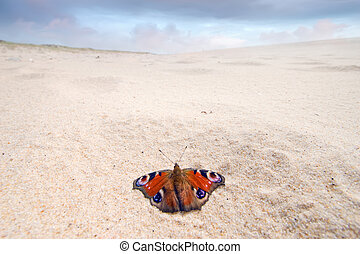 Nymphalis butterfly on a beach