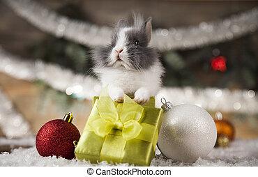 nyuszi, szent, csecsemő, kalap, karácsony, piros