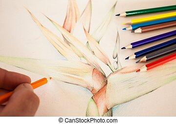 ołówek, barwa, ręka, strelitzia, rysunek