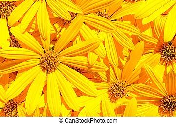 oświetlany, kwitnąc, żółty, światło słoneczne, kwiaty, karczoch