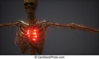 ożywienie, ludzkie serce, cg, chory