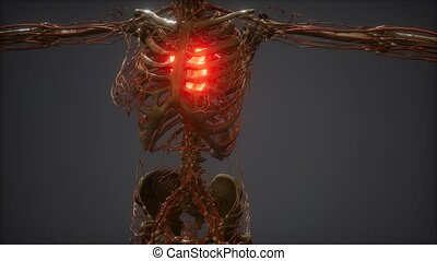 ożywienie, serce, cg, chory, ludzki