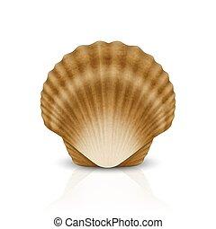 o, concha marina, realista, template., venera, frente, ...