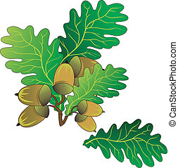Oak acorns - Branch of oak with green leaves and ripe acorns...
