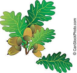 Oak acorns - Branch of oak with green leaves and ripe acorns...