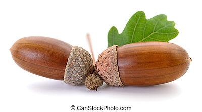 Oak acorns with leaf.