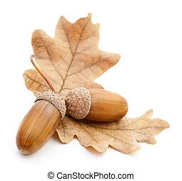 Oak acorns with leaves.