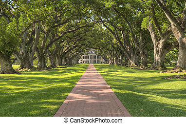 Oak Alley Plantation Tree Tunnel Leading Up To The Mansion