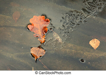 Oak and birch leaf frozen in the frozen river. Horizontal.