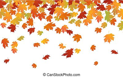 Oak and maple leaves falling down in autumn