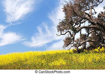 Oak and Mustard Flowers