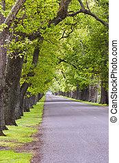 Oak Avenue 01 - An oak lined road in Hastings, Hawke's Bay, ...