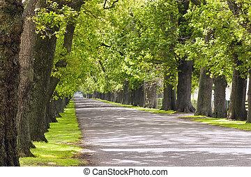 Oak Avenue 02 - An oak lined road in Hastings, Hawke's Bay, ...