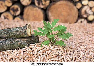 Oak biomass - wood, pellets, young tree
