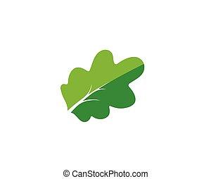 oak branch vector illustration template