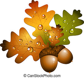 Oak branch with acorns over white. EPS 10, AI, JPEG