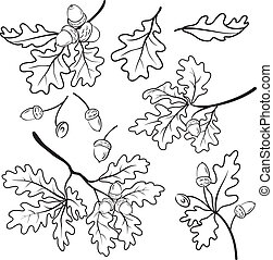 Oak branches with acorns, outline - leaf, vector, nature,...
