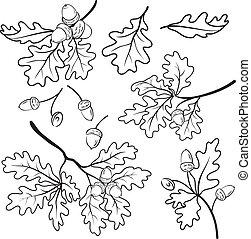 leaf, vector, nature, green, oak, tree, plant, acorn, flora, foliage, forest, wood, set, eps10, branch, isolated, seed, botany, brown, verdure, natural, summer, environmental, growth, environment, organic, symbol, fruit, nut, autumn, life, season, twig, ripe, botanical, seasonal, element, object, ...