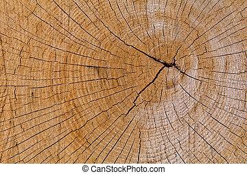 Oak Cross Section Crack