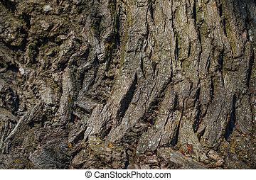 oak crust texture, closeup view