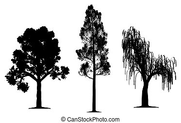 Oak, forest pine and weeping willow tree silhouette on...