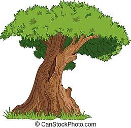Oak - Illustration of very old oak