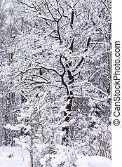 oak in a winter forest