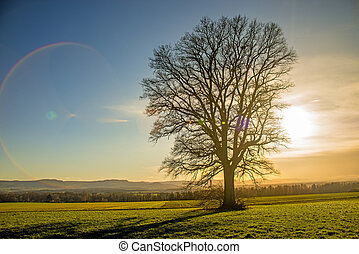 oak in autumn with sky at sunset