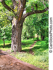 oak in park
