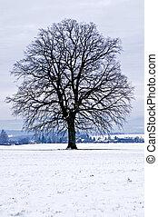 oak in winter