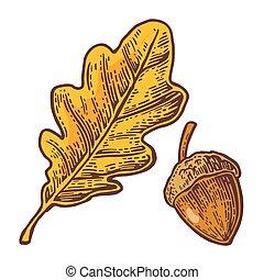Oak leaf and acorn. Vector color vintage engraved illustration.