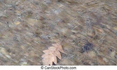 Oak leaf in water - Oak leaf in the water, drift away with...