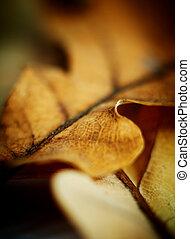 Oak leaf, macro shot. Abstract autumn background. Very shallow DOF.
