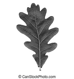 Oak leaf - Oak tree leaf - isolated over white background -...