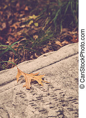 Oak Leaf on Tombstone