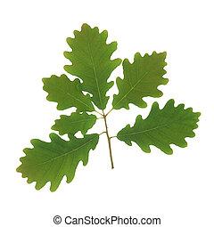 Oak Leaf Sprig